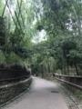 [旅行][京都]2018/07/30、京都。朝、竹林の道