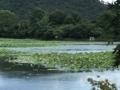 [旅行][京都]2018/07/30、京都。嵐山嵯峨野、大覚寺から望む広沢池