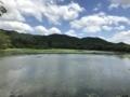[旅行][京都]2018/07/30、京都。嵐山嵯峨野、大覚寺。広沢池