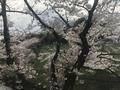 [行楽]2019/04/02、武道館と桜