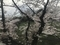 2019/04/02、武道館と桜