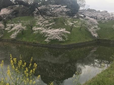 2019/04/02、北の丸公園のお濠