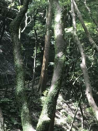 2019/09/09、箕面の滝、遊歩道