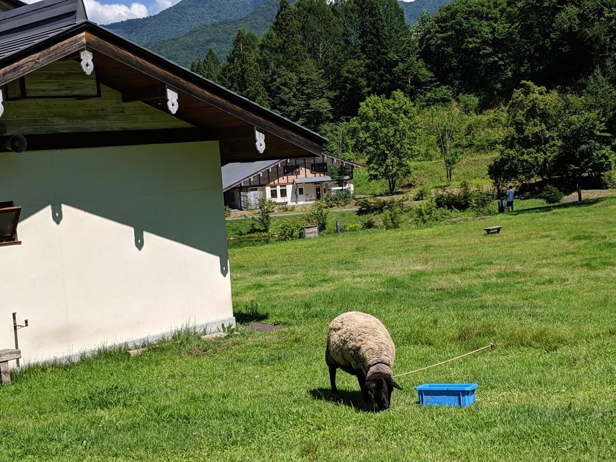 高原で草を食べる羊