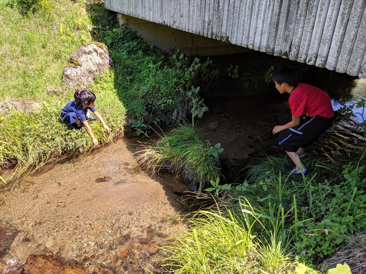 牧場を流れる川で水遊び