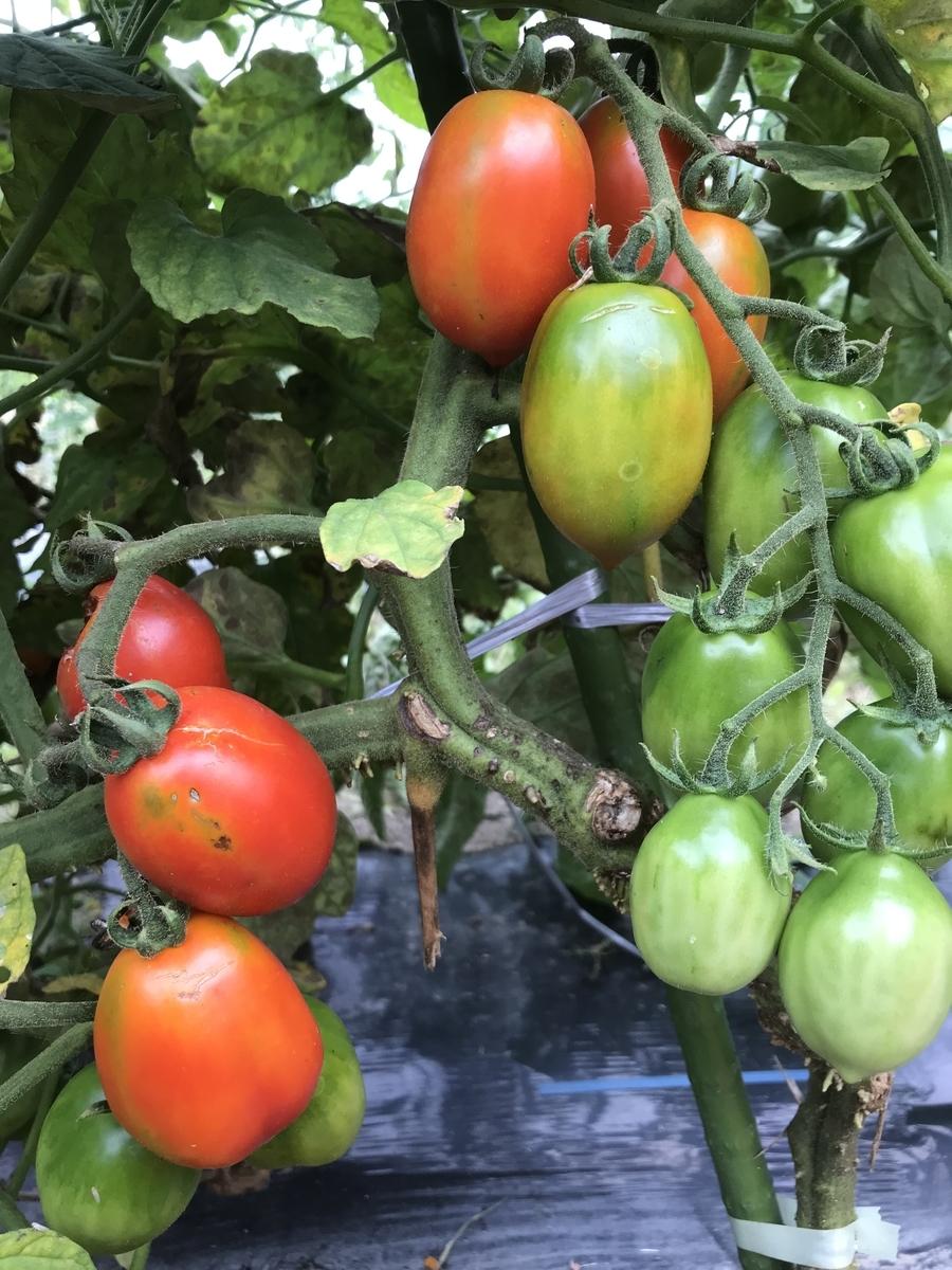 f:id:organicfarm:20190823130545j:plain