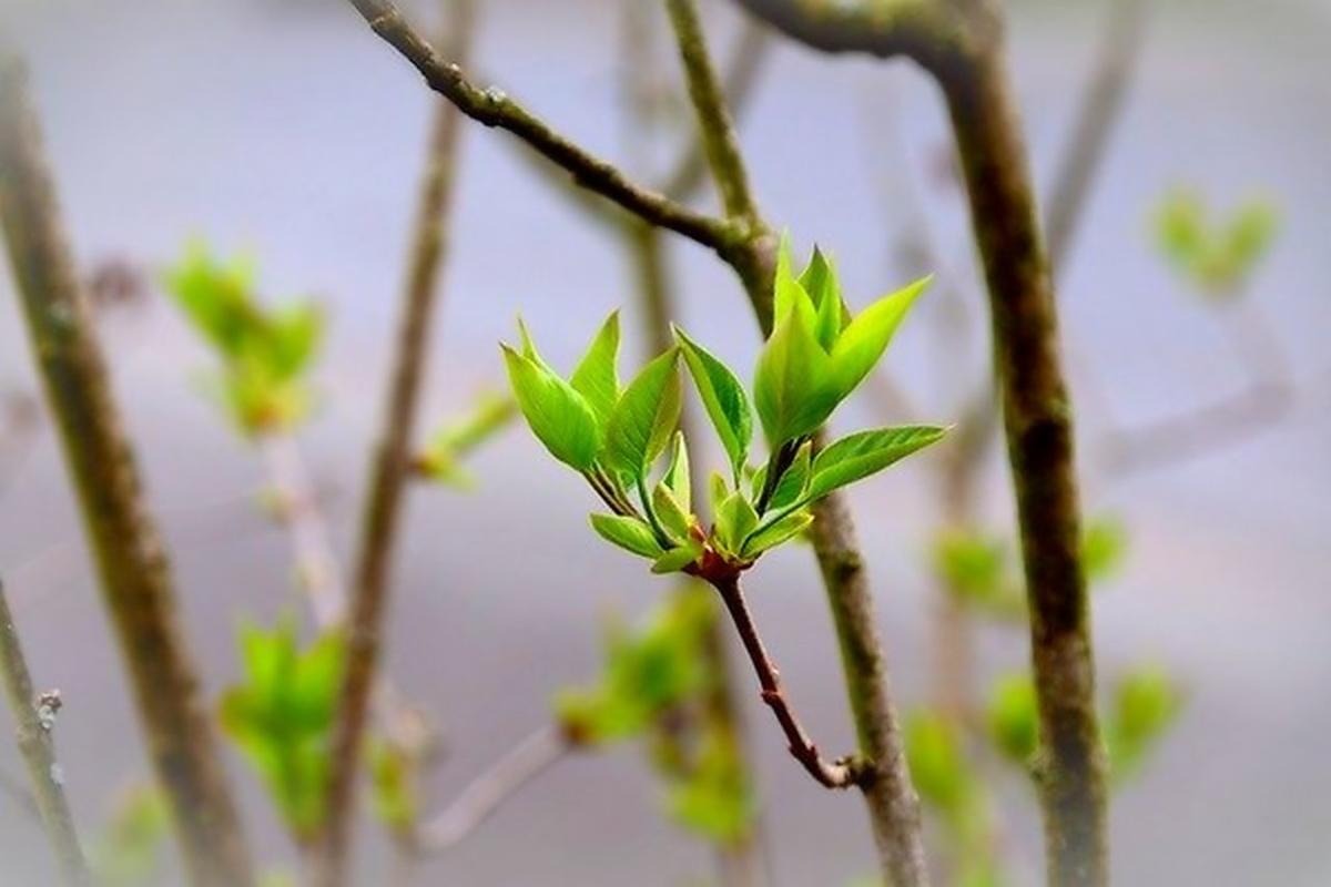 か 歌詞 どこ が で 春