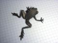 Poison Dart Frog (R.J.Lang) / diagrams on OTM#131