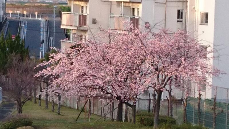 f:id:origuchiisao:20170322173006j:image