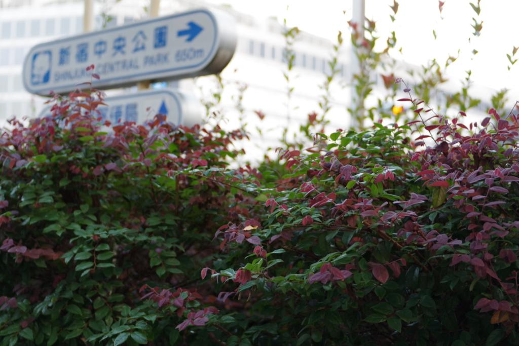 f:id:orihakisaragi:20161020205844j:plain