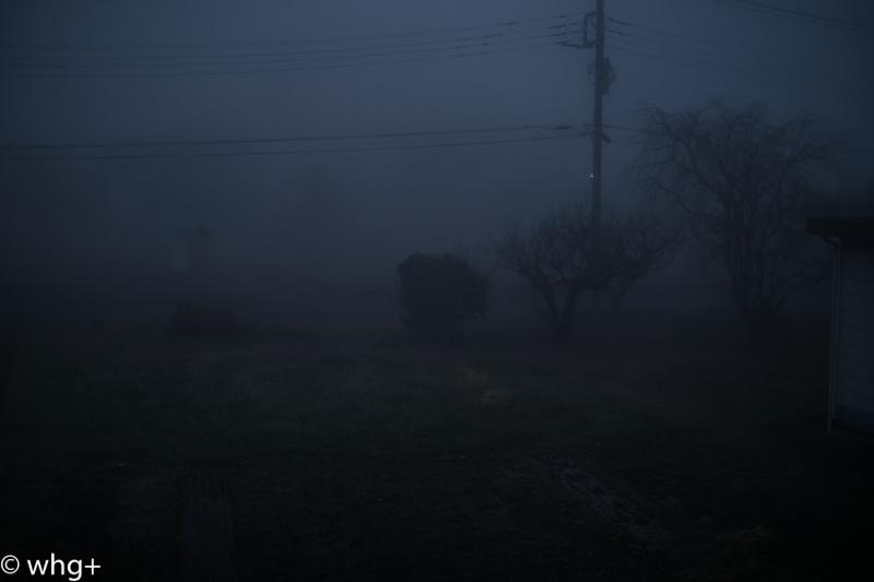 領家・濃霧の朝・・