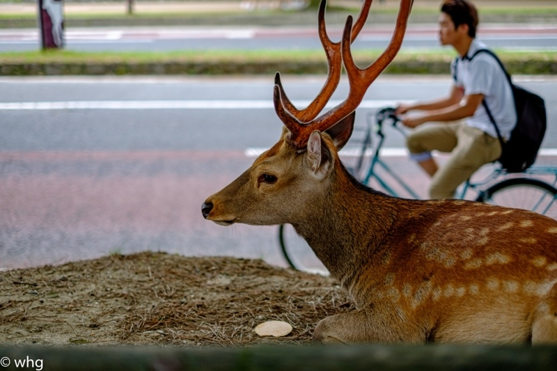 deer・・