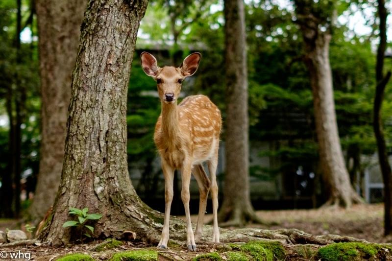 deer・・03