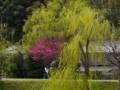 京都新聞写真コンテスト 早春の道