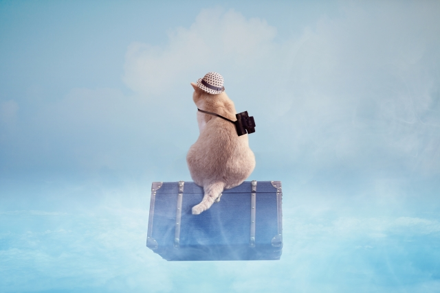 旅をする猫