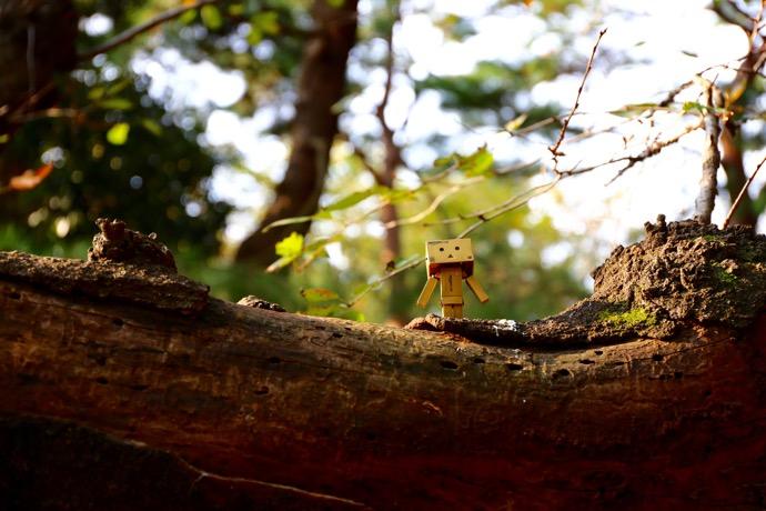 ダンボーと木