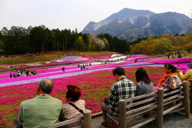秩父 芝桜の丘 羊山公園15