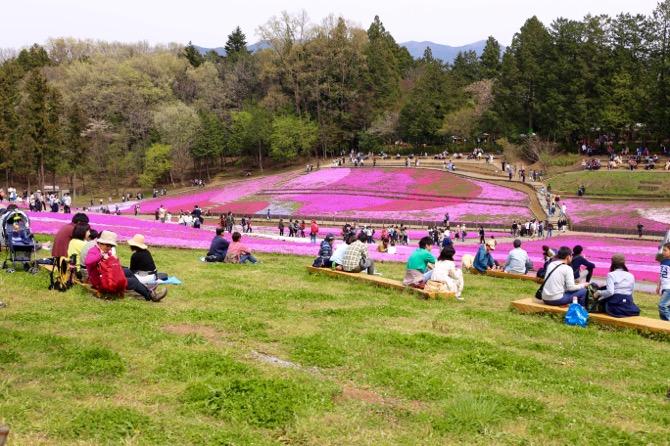 秩父 芝桜の丘 羊山公園14