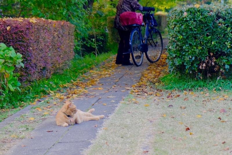 多摩湖自転車道 猫