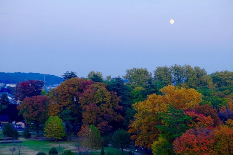 狭山公園 月