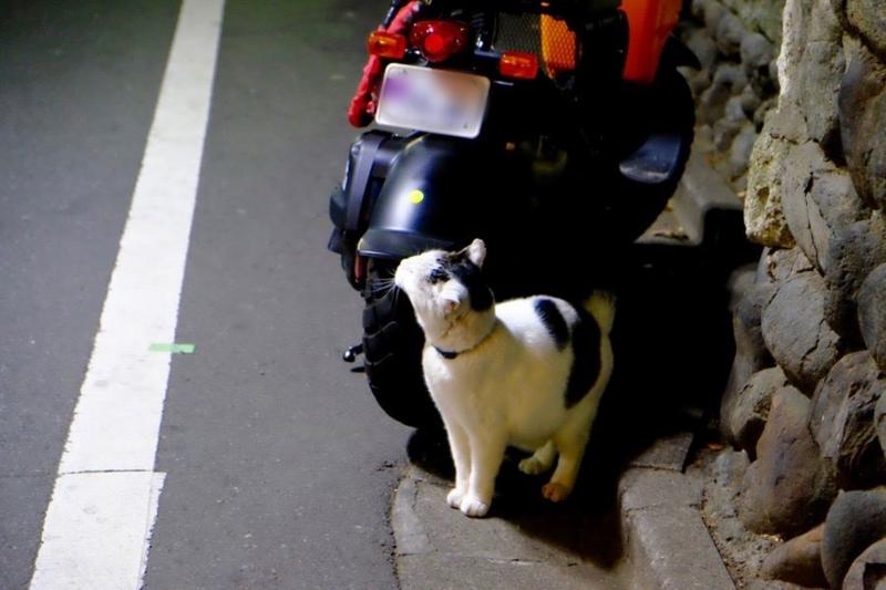 夜の鬼子母神と猫