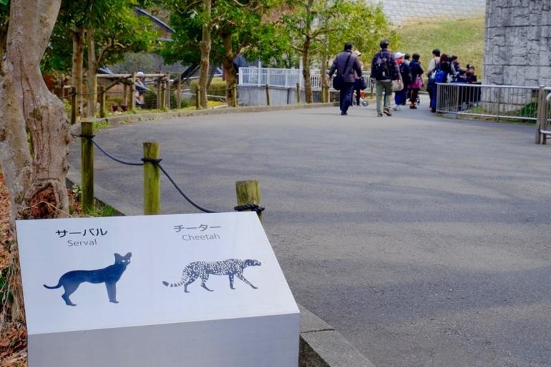 多摩動物公園 チーター サーバル