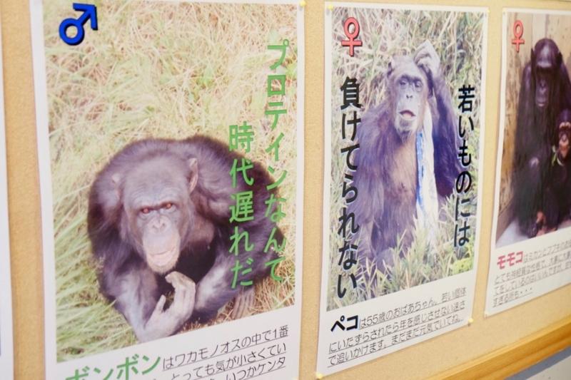 多摩動物公園 チンパンジー 室内