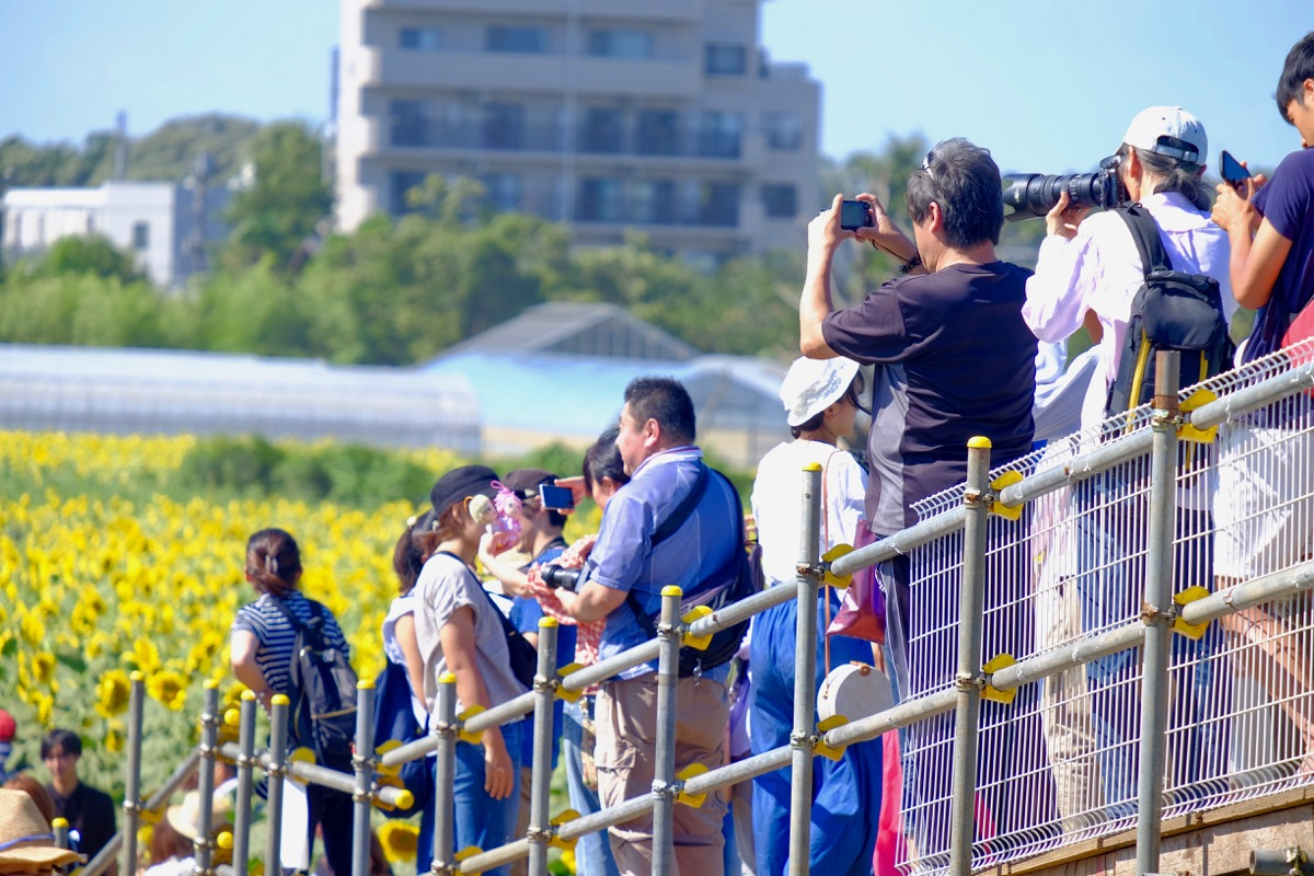 清瀬ひまわりフェスティバルの写真2