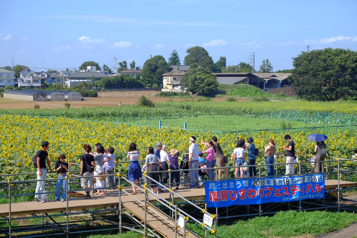 清瀬ひまわりフェスティバルの写真4