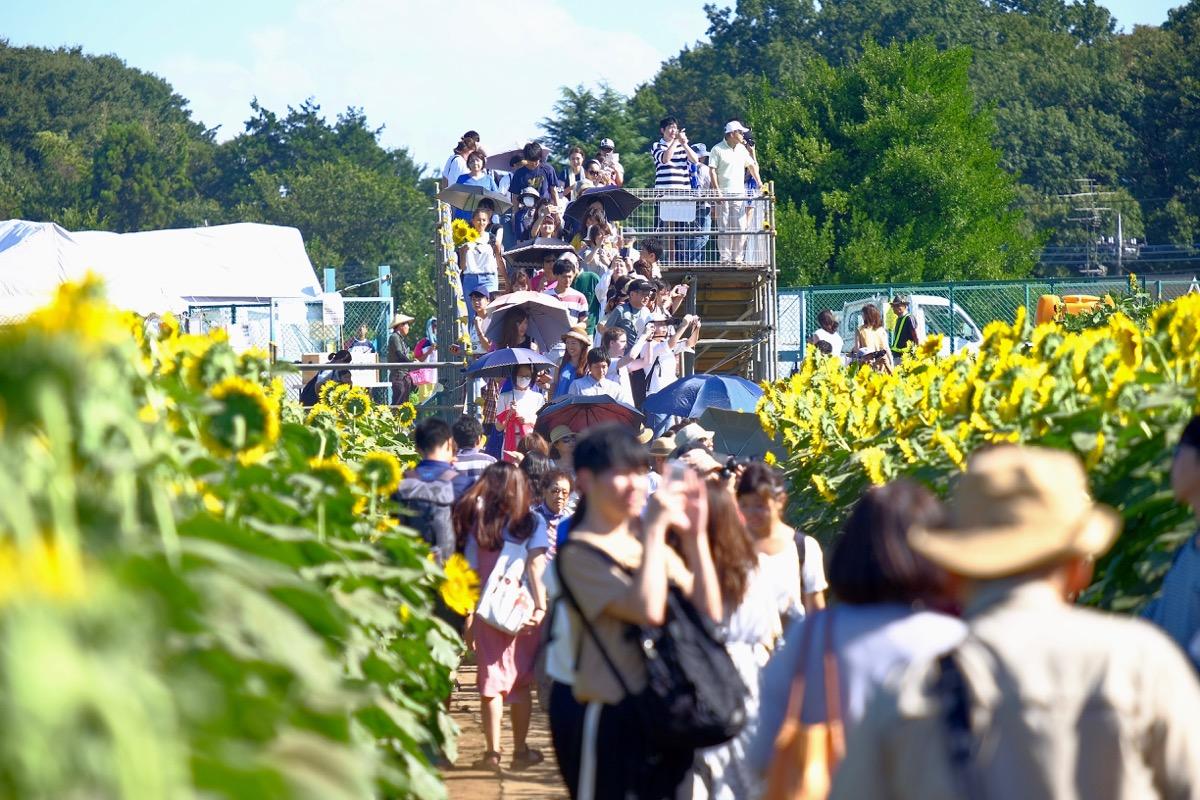 清瀬ひまわりフェスティバルの写真14