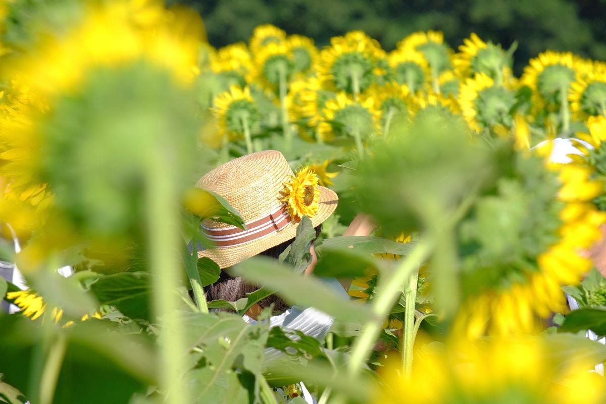 清瀬ひまわりフェスティバルの写真17