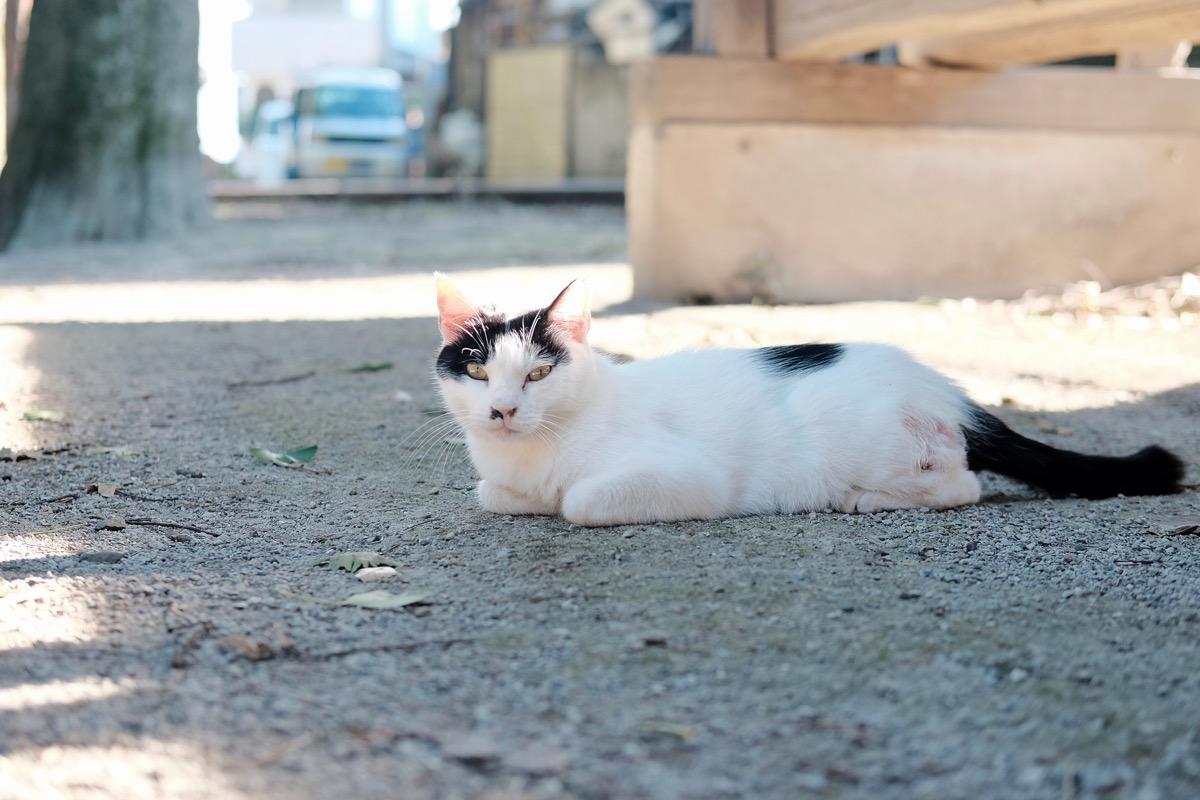 猫(写ルンですとミラーレス一眼を比較)