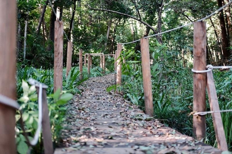 氷川神社・緑の散歩道1
