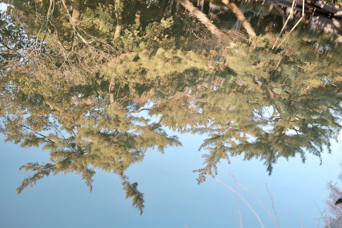 石神井公園・石神井池4