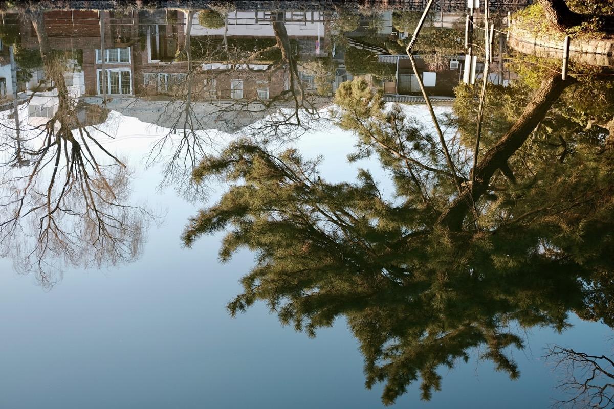 石神井公園・石神井池5