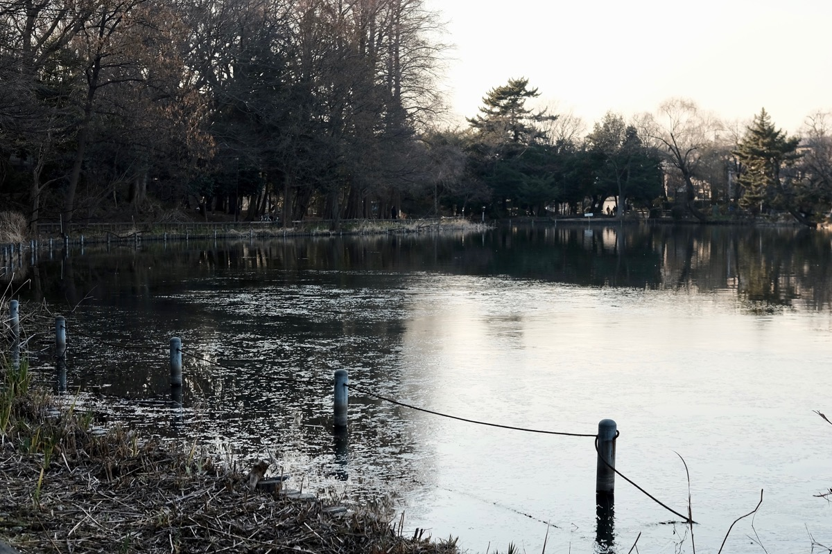 石神井公園・石神井池2
