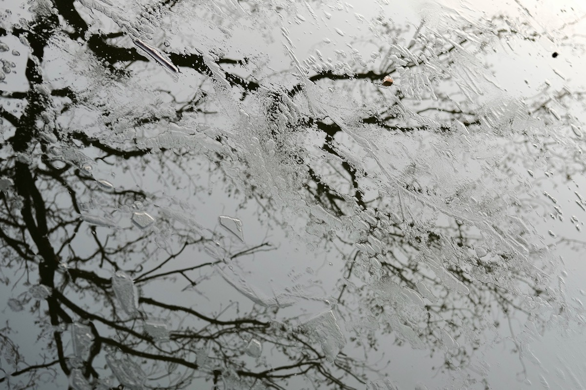 石神井公園・石神井池6