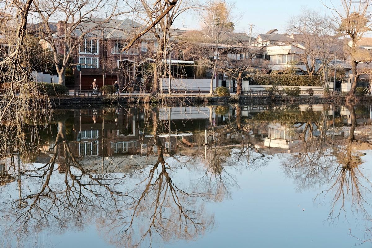 石神井公園・石神井池7