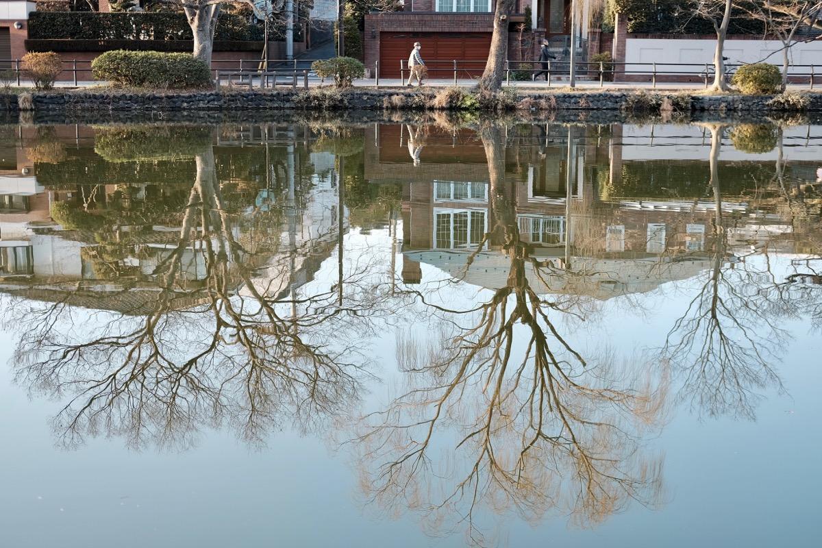 石神井公園・石神井池9
