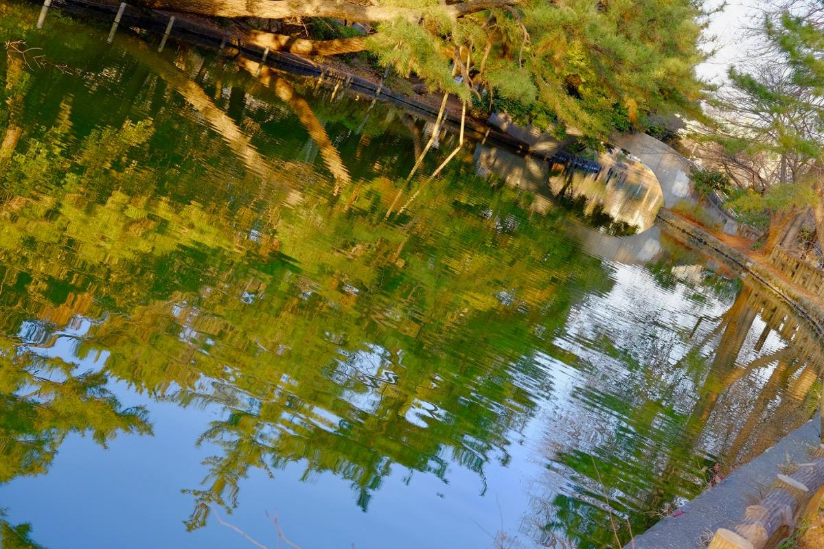 石神井公園・石神井池10
