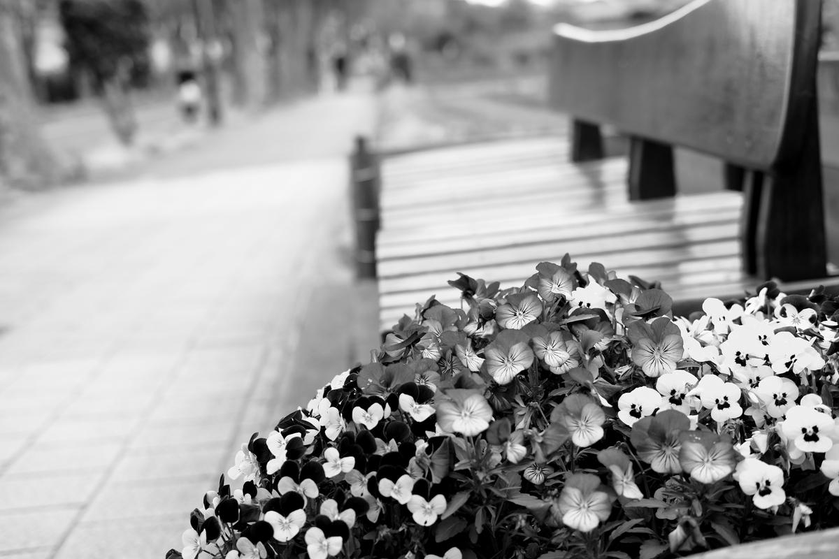近所のベンチと花壇
