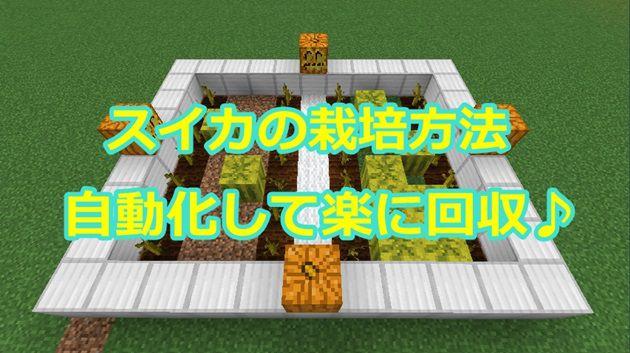 スイカの栽培方法と自動化