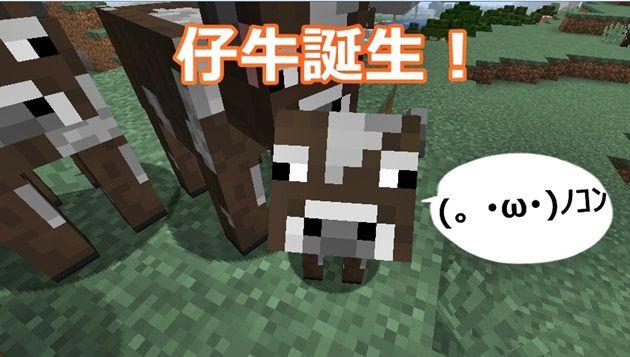 仔牛が生まれる