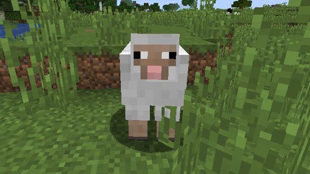 羊の生息地