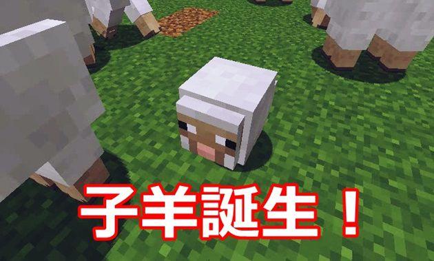 子羊が誕生