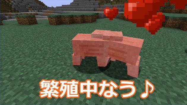 豚の繁殖方法