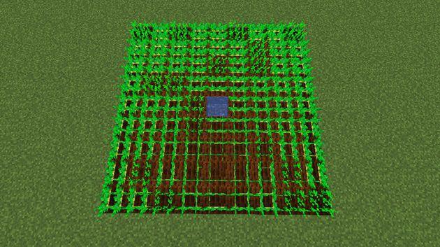 普通の畑の植え方