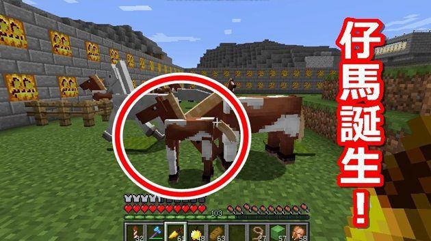 馬の繁殖にも使う