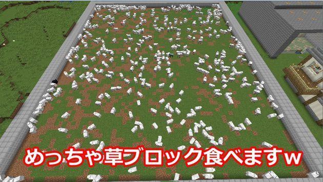 大きい羊牧場