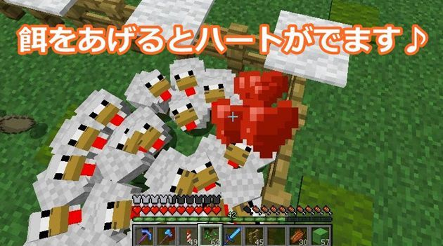 鶏の繁殖方法